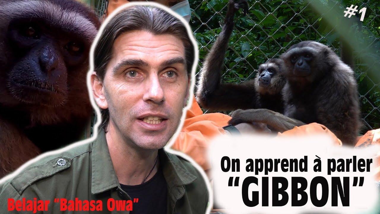 """ET SI ON PARLAIT """"GIBBON"""" ? #1"""