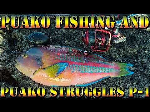 Puako Fishing and Puako Struggles - Dunking and Whipping The Sunrise Hours -  BODS 43 Part 1