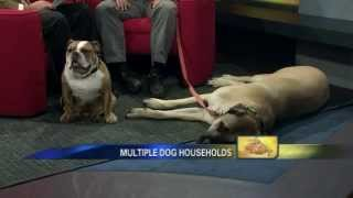 Managing A Multiple Dog Household - News12 New Jersey The Pet Stop Oct 11, 2011