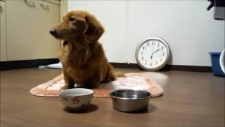 こんにちは!ダックスフント らんちゃんです。 らんちゃんは犬として可能...