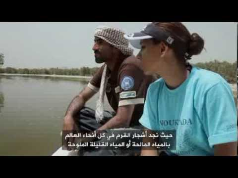 The  Environment Show with Ask Ali: Abu Dhabi's Mangroves