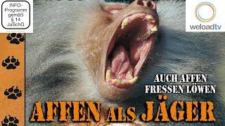 Affen als Jäger