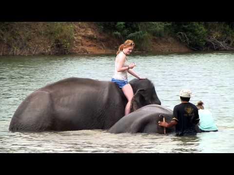 Elephant Village, Tatit Homestay , Surin Province, บ้านตาทิตย์โฮมสเตย์