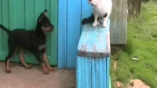 Щенок собака и кот - это очень смешно .wmv