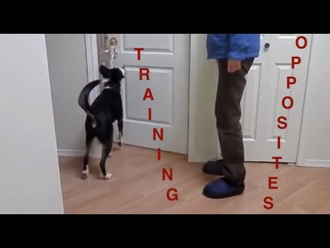 Teaching Dogs Cues Using Opposites: Clarifying Understanding of Signals in Context