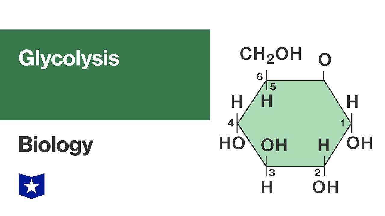 medium resolution of glycolysi diagram biology