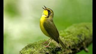 Звуки природы....Пение птиц