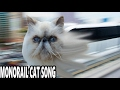 🌈 The Monorail Cat Song 🚂🚋🚋🚋 Epic Cat Music Video - Funny Persian Cat Video