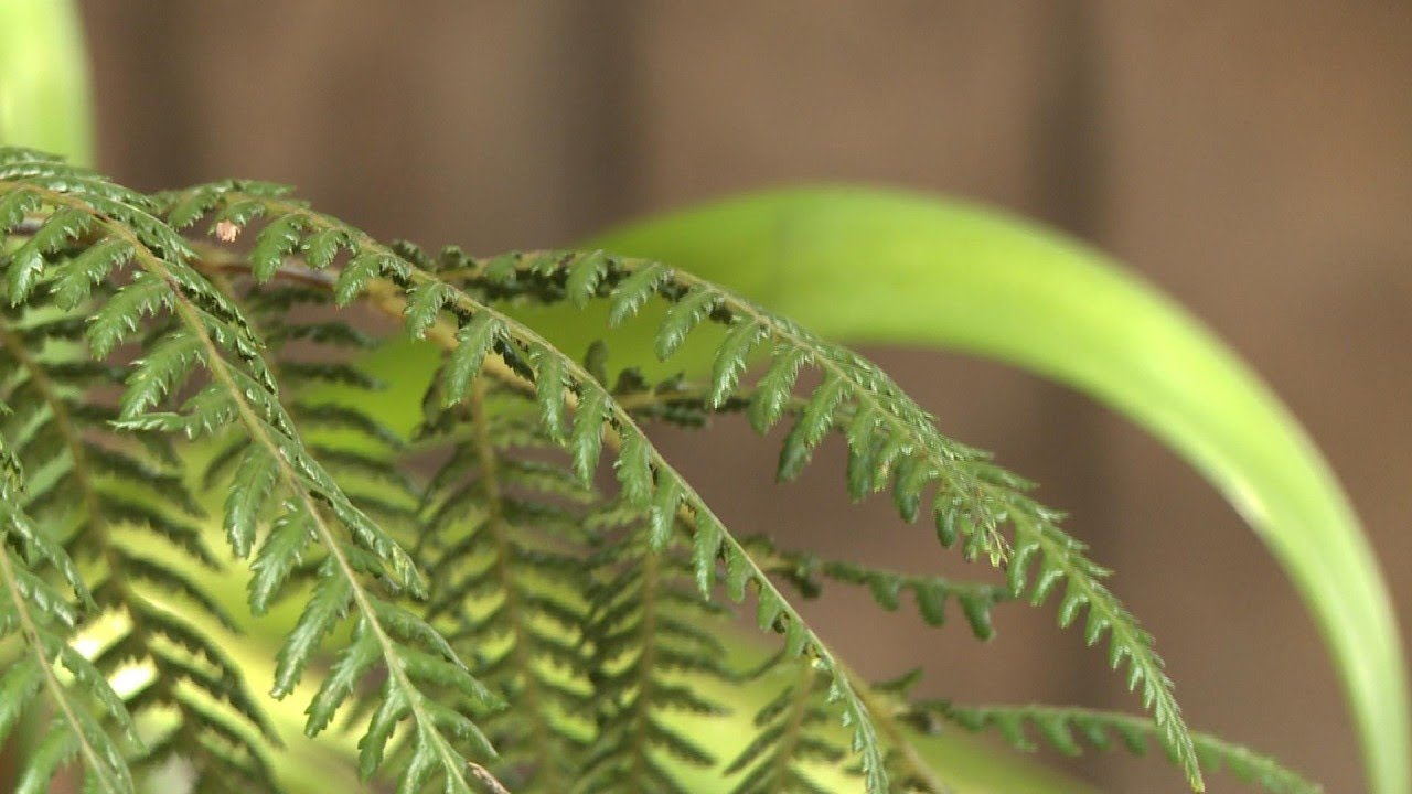 Nature et Envionnement
