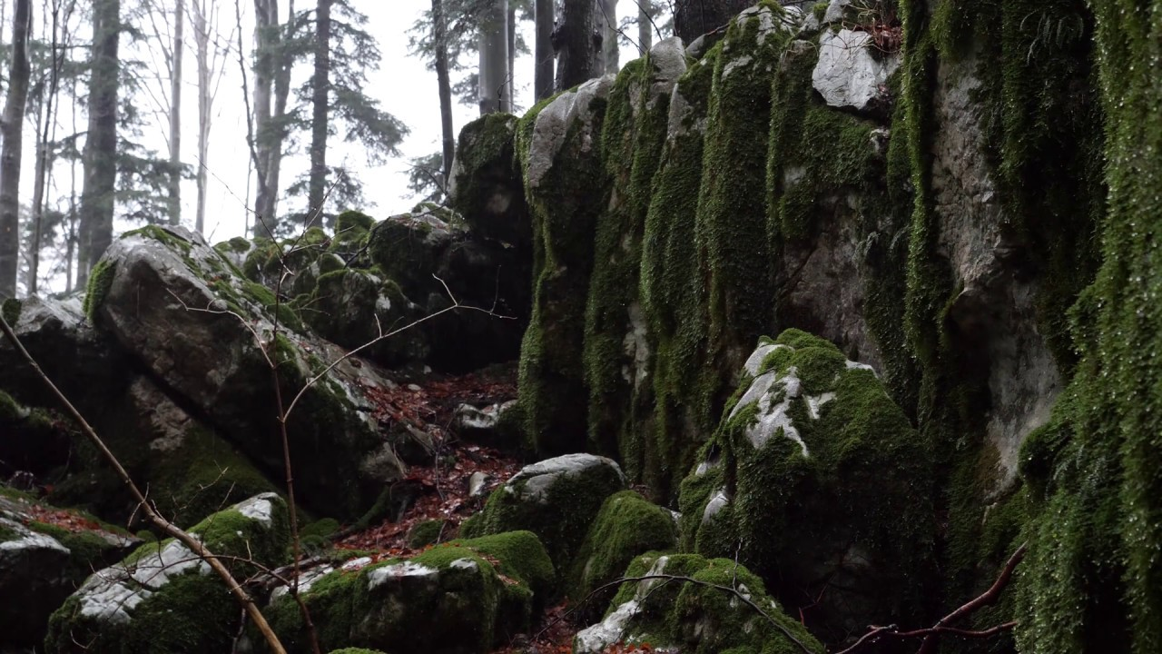 Relaxing Sound of Rain and Wind in Forest 2 Hours / Rain Drops Falling From  Trees and Moss