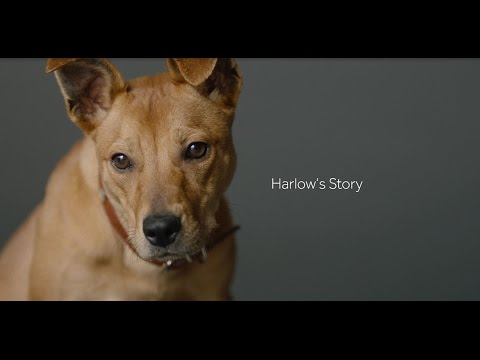 You can't hide real love - Harlow's story