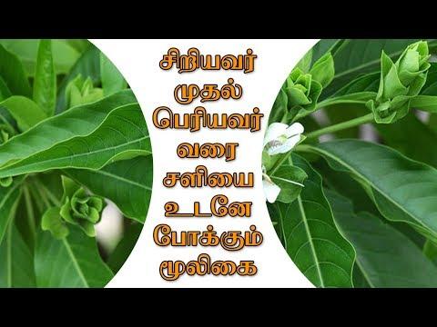 பல-நோய்களை-தீர்க்கும்-மூலிகை-#ஆடாதொடை #adhatoda-best-home-remedy-for-bp,-jaundice,-cough,-high-fever