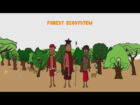 Ano ang Biodiversity?