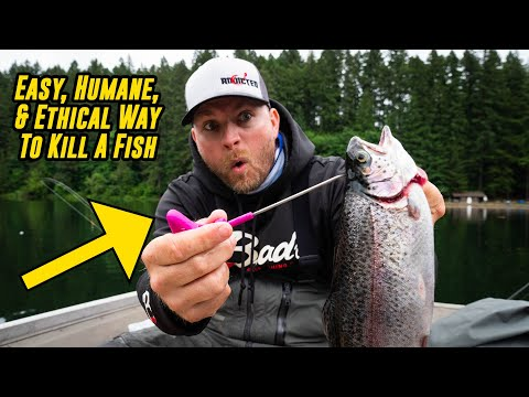 Best Way To KILL A FISH (Easy, Ethical, Humane!)