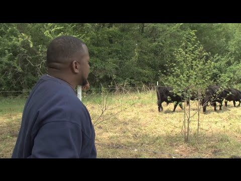 Georgia Farm Offers Sanctuary And Hope To Vets Suffering From PTSD