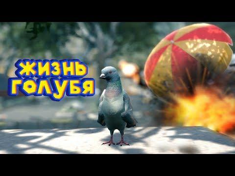 СИМУЛЯТОР ВРЕДНОГО ГОЛУБЯ Pigeon Simulator
