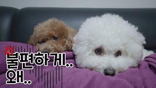 강아지 키우는 집 거실 쇼파풍경 (feat. 강아지 키…