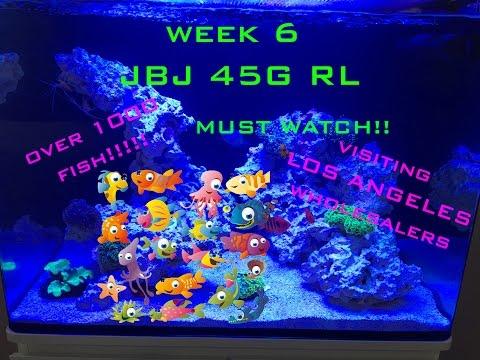 JBJ 45G RL (WEEK 6 VISITING WHOLESALERS TONS OF EYE CANDY!)