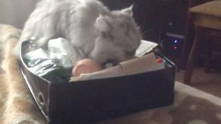 Кошка ищет водку