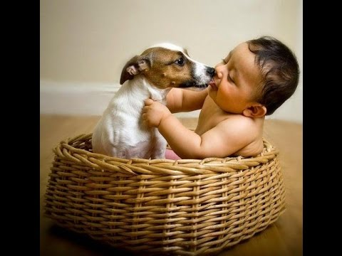 Jack Russell Dogs and Babies Friendship Video Compilation – Dog and Baby Videos