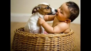 Jack Russell Dogs and Babies Friendship Video Compilation - Dog and Baby Videos