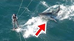 Dieser Hai verfolgte einen Menschen, was dann passierte ist unglaublich