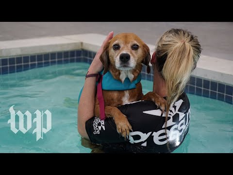 Dogs are welcome in this pool