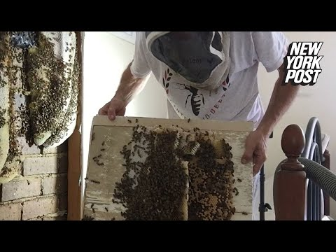 Kat Jackson - A Few Bee's In A Bedroom Turned Into Thousands