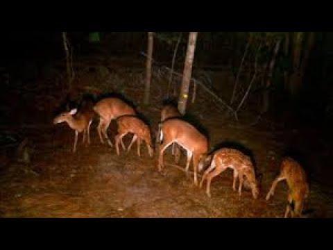 Attract Deer  Absolutely Best Deer Feeder At No Cost. Raccoon Free