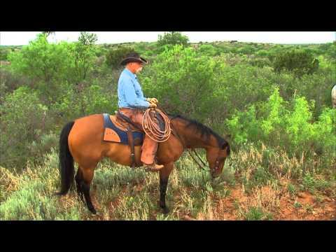 Matador Ranch, 2013 Zoetis/AQHA Best Remuda Award Winner
