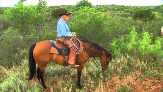 matador ranch 2013 zoetis aqha best remuda award winner