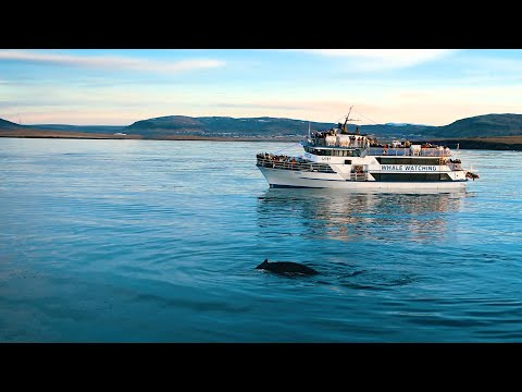 Whale Watching Boat Cruise From Reykjavik, Iceland