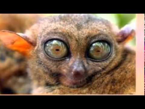 Os bichos mais feios do mundo youtube - Bichos en casa fotos ...