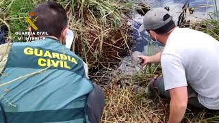 Guardia Civil investiga a una persona por capturar y vender galápagos