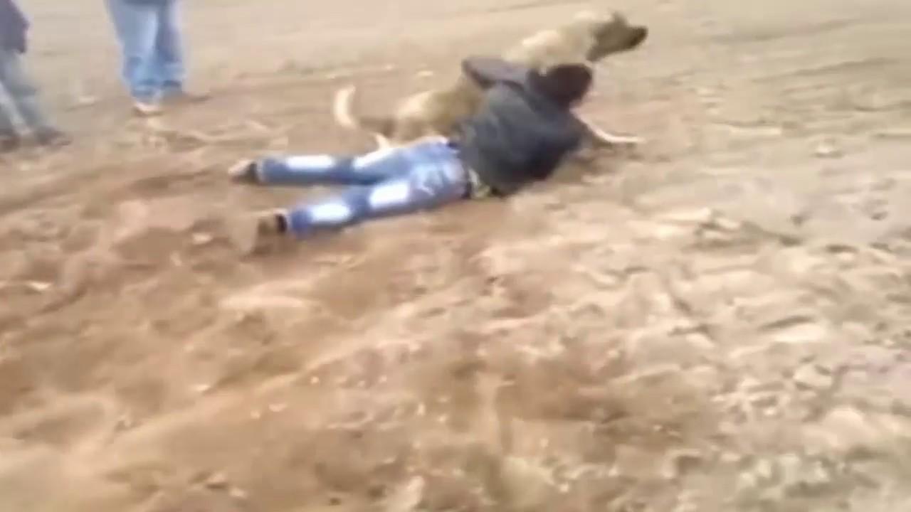 Kangal vs Owner , Kücük enisteyi kaciran Kangal😁😁