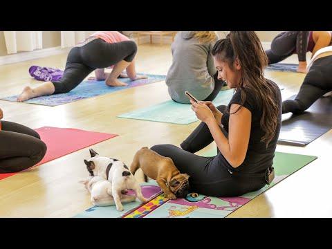 Puppy Yoga in Toronto