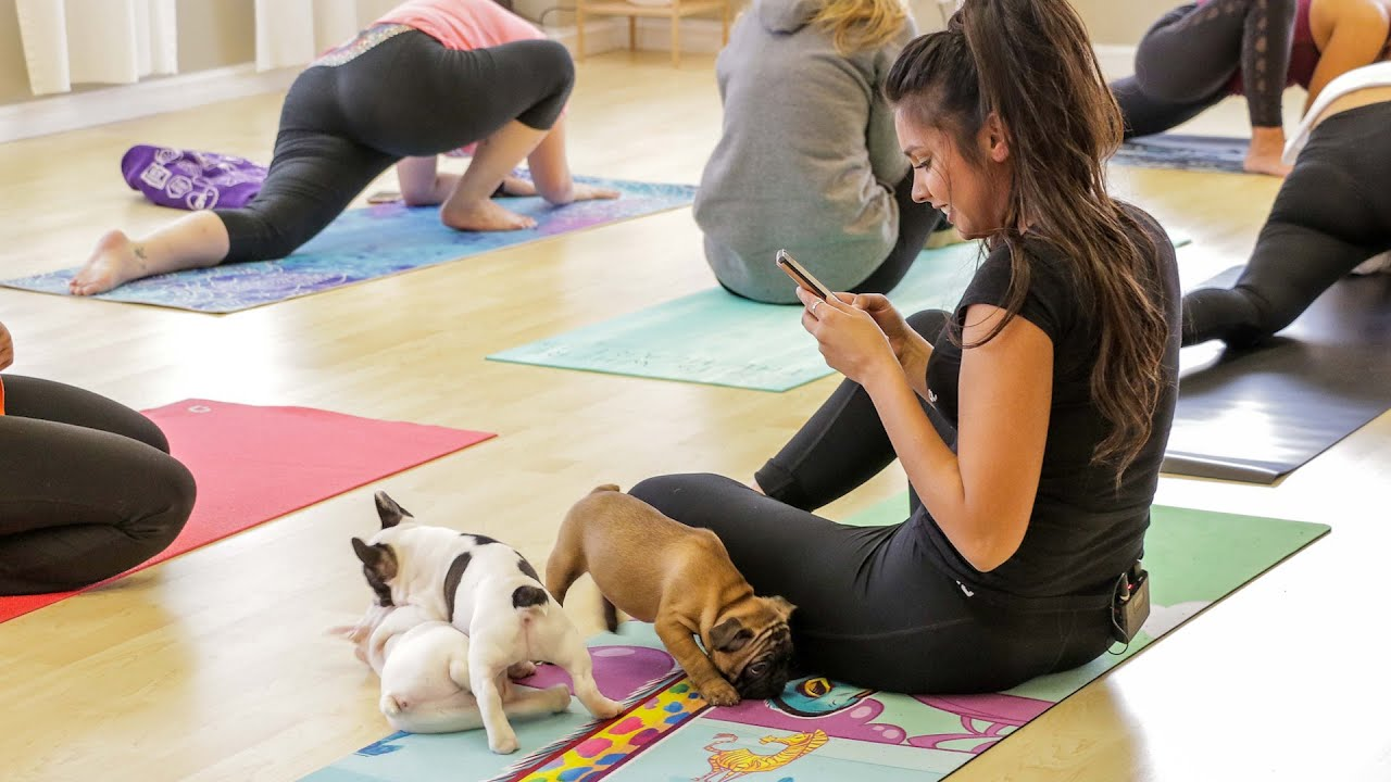 Puppy Yoga In Toronto Lets Cute Puppies Roam Freely During Class Youtube