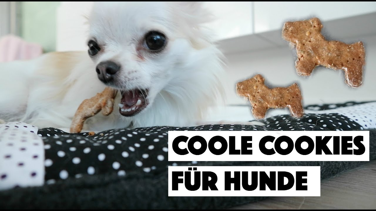 dein hund wird es lieben coole cookies f r hunde backen diy youtube. Black Bedroom Furniture Sets. Home Design Ideas