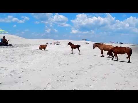Assateague Island Ponies on the Beach
