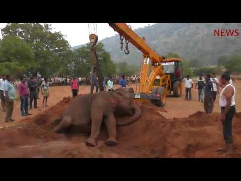 Ailing elephant collapses in Coimbatore's Periya Thadagam, rescued by forest officials
