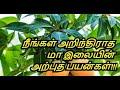 Benefits & Uses Of Mango Leaves in Tamil   Treating Diabetes   Heal Burns   Healthy Life - Tamil.