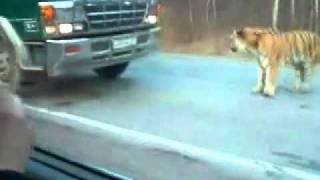 В России не только медведи по улицам ходят :)
