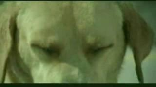 pes paroháč z Vlacháče