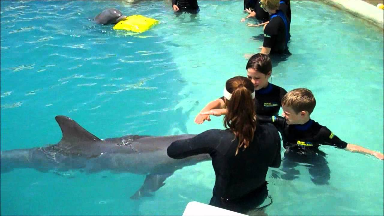children swim with dolphins miami youtube