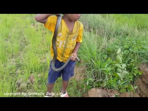 the trap  Terrifying!! Fearless Brothers Catch Two Big Snakes While Going Bird Hunting