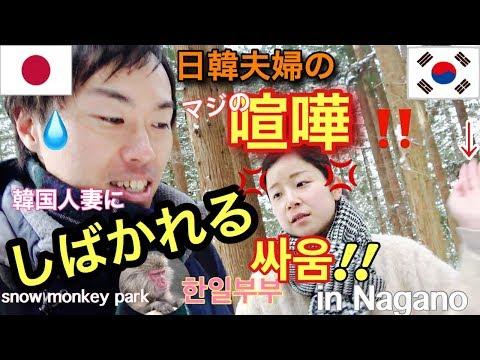 【日韓夫婦】マジで喧嘩が怖すぎる!温泉に入る猿を見に行こう!SNOW MONKEY JAPAN 地獄谷野猿公苑 Jigokudani Snow Monkey Park
