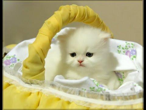 احلى صور القطط المتحركه للقطط ايضا لحظات براءه - YouTube