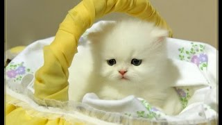 احلى صور القطط المتحركه للقطط ايضا لحظات براءه