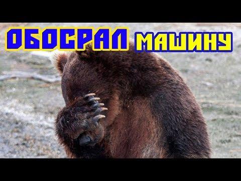 МИШКА ОБОСРАЛ МАШИНУ: подборка приколов,новые приколы,ржака