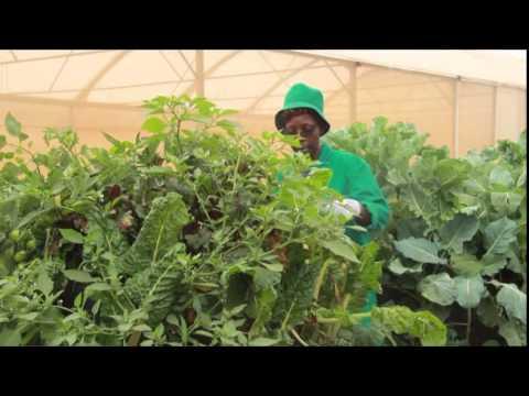 Hela Mchangani: Bag Gardening.